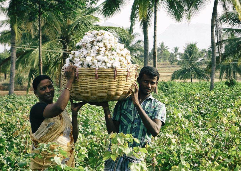 Cultivo orgánico