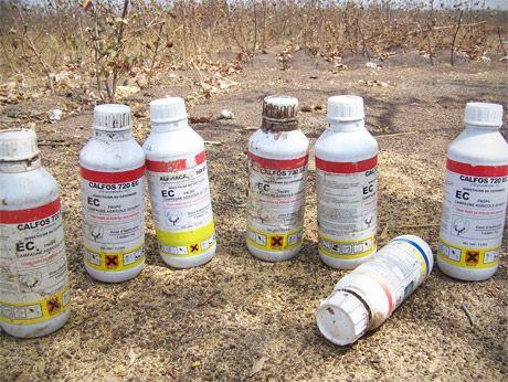 Diferentes pesticidas tóxicos para o cultivo de algodón