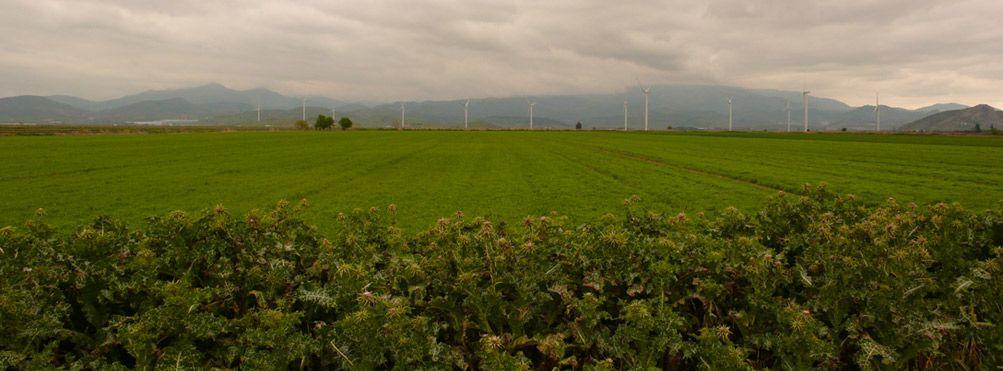 El cultivo de algod n ecol gico y el ecosistema blog xiro for Rotacion cultivos agricultura ecologica