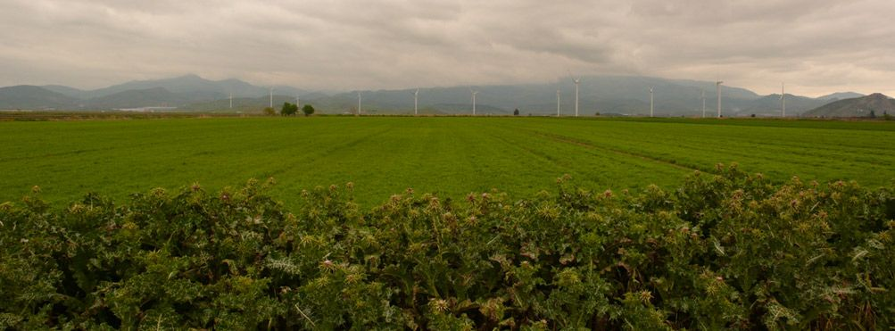 Rotación de cultivos de algodón orgánico
